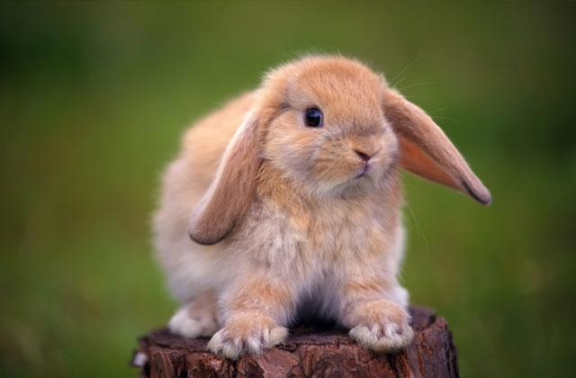 konijnennamen voor je nieuwe konijn | dierennamen